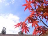 Hình hoa lá