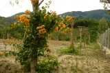 Dàn hoa giấy (2008)