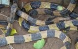 Trại rắn Đồng Tâm - Mỹ Tho - Tiền Giang