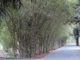 Đường vào vườn cò Bằng Lăng - xã Vĩnh Thạnh - quận Thốt Nốt - Cần Thơ