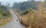 Từ biên giới Thái Lan - Kampuchia về Siem Reap còn phải đi 150km nữa !