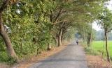 Đường đến Gáo Giồng - Đồng Tháp , đồng quê Việt Nam thanh bình .