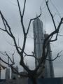 Cao ốc Phố Đông-Thượng Hải