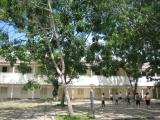 Trường Cường Để